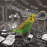 ркс, белое и пушистое жкх, календарь, попугай