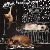 ркс, белое и пушистое жкх, календарь, котята, тонкинез