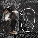 ркс, белое и пушистое жкх, календарь, кролик